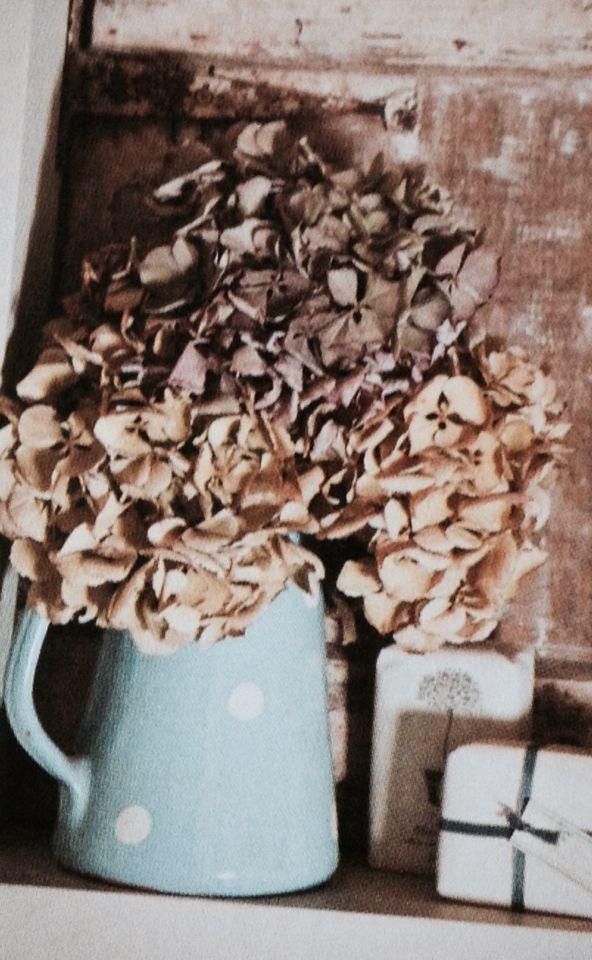 Dried hydrangea heads