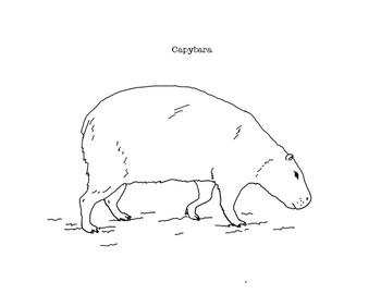 Capybara Coloring Page Capybara Coloring Rodentspecies In 2020 Coloring Pages Capybara Animal Drawings