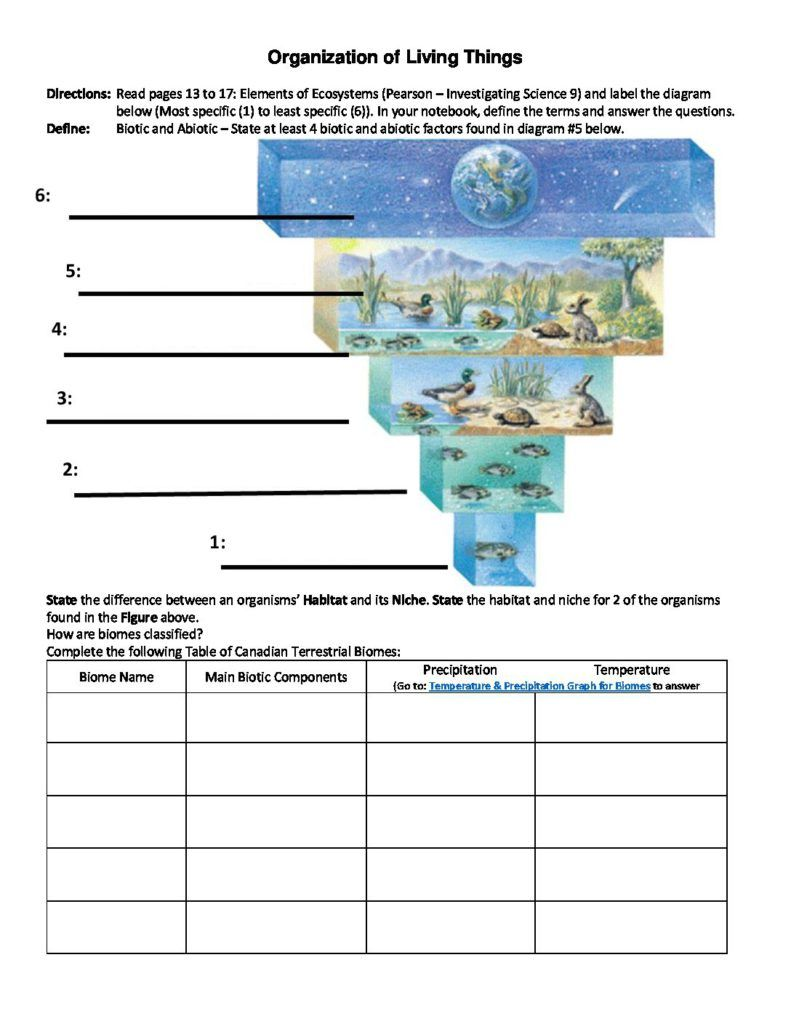 Organization Of Living Things Worksheet 2017 2018 School Year
