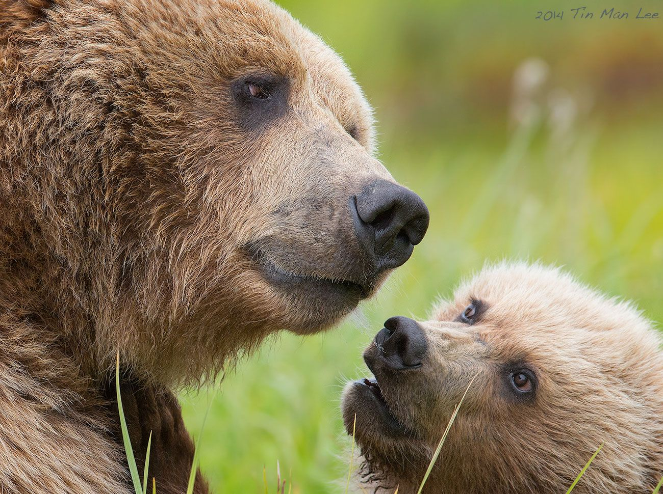The mama bear looked so wise, as if listening to the story ...