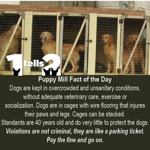 The Facts About Puppy Mills Are Heartbreaking The Cruel Life A