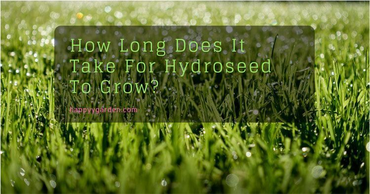How long does it take for hydroseed to grow lawn care