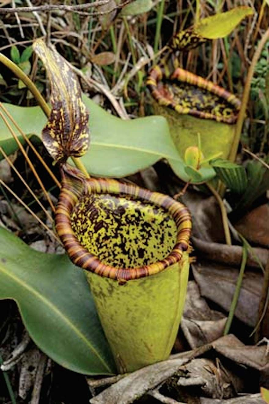 Top 9 Mysterious Lost Worlds On Planet Earth Rare Plants Plants Pitcher Plant