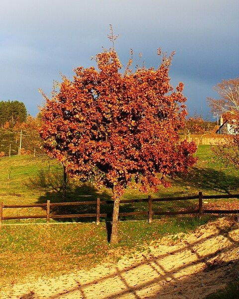 On instagram by marienostalgia #landscape #contratahotel (o) http://ift.tt/1RAdcI8 Autumn's still around   #nature #tree #clouds #sky #silhouette #mountains #river #cannon #photography #p3top #igersportugal #igers #instamood #instashot #portugaldenorteasul #adventurethatislife #beautifuldestinations #adventurer #explorer #life #roamtheplanet #Canon_photos #canonphotography