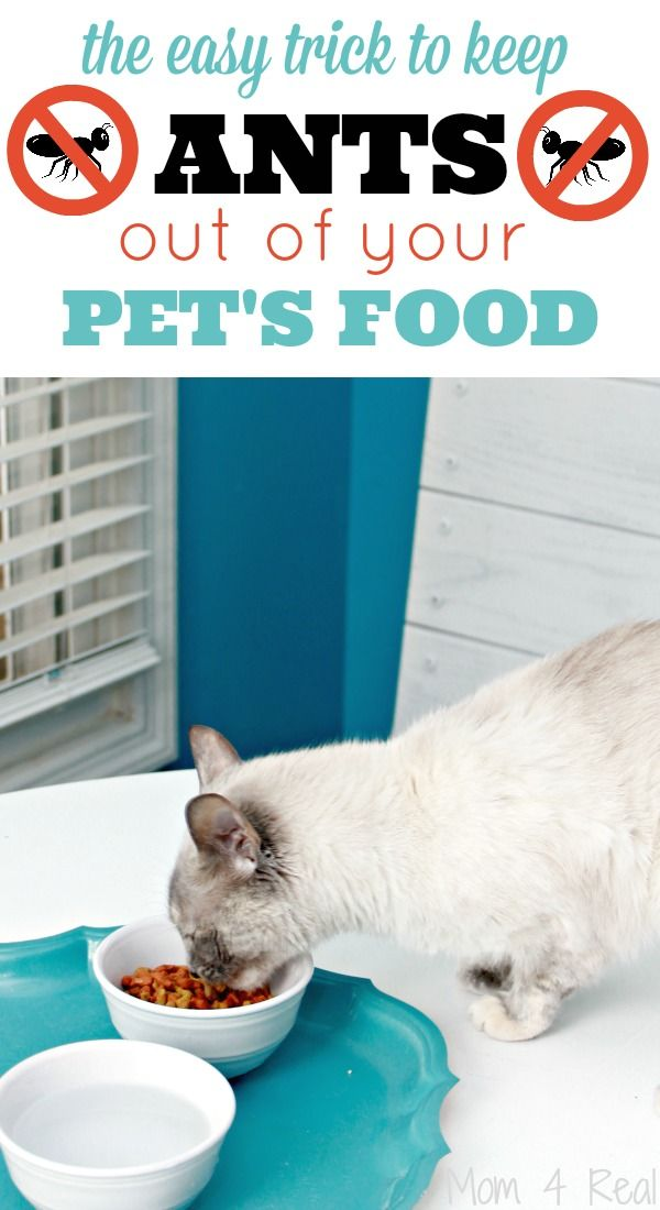 How to keep ants out of pet food with no chemicals pet food ant how to keep ants out of pet food with no chemicals ccuart Images