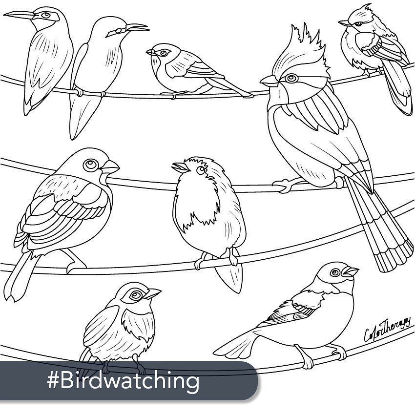 Vogel Malvorlagen Instagram   Zeichnen und Färben