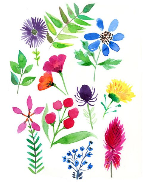 Herbarium S Watercolor Botanical Drawings Happy Art