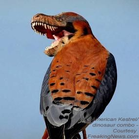 """An Avian Big Bang   BirdNote """"What do T. Rex and a cardinal have in common?"""" I'm squealing with delight!!"""