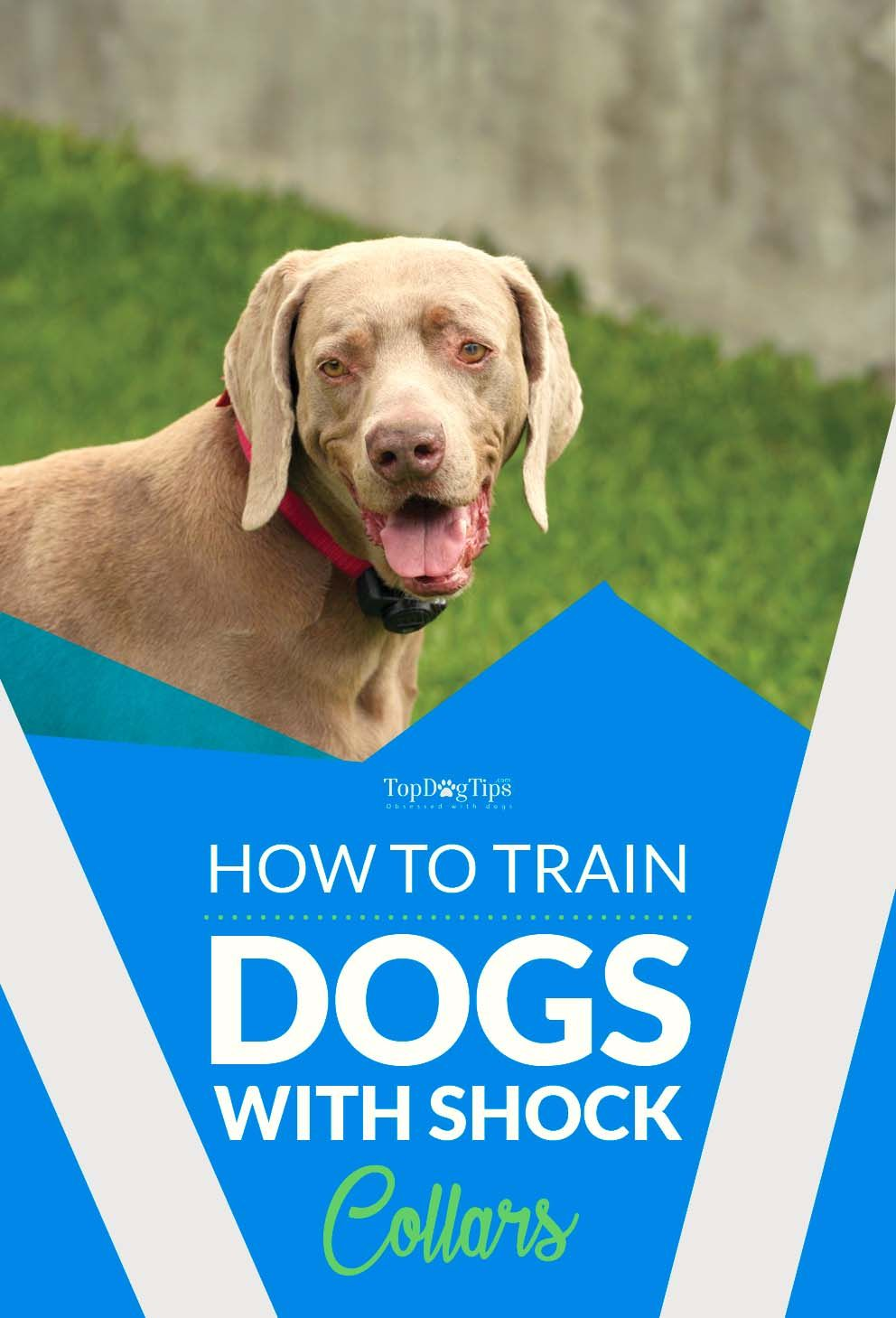 Ask A Dog Trainer Training Dogs With Electronic Shock Collars