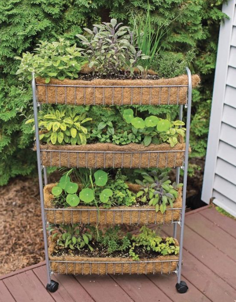 Clever Vertical Herb Gardens That Will Grow A Lot Of Herbs In A Small Space Home Design Ideas Taman Vertikal Kebun Herbal Ide Berkebun