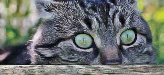Urine de chat les plantes r pulsives conseils et id es jardin jardins astuce jardin et - Repulsif chat jardin naturel ...