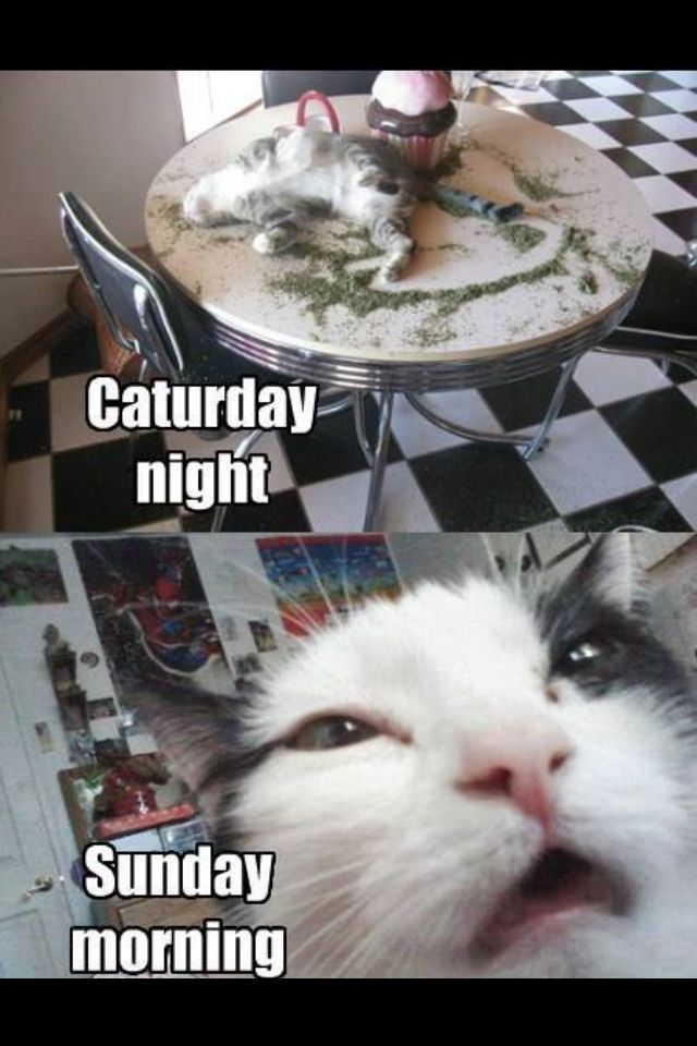 Caturday Night Funny Cat Photos Funny Dogs Funny Cat Memes