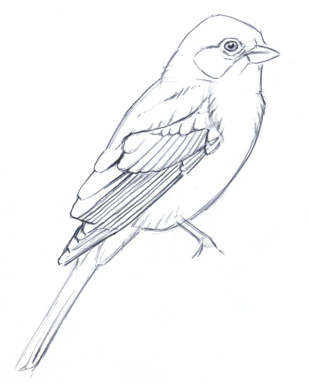 Line Art Drawing Easy : Learn to simplify bird plumage with a few lines drawing