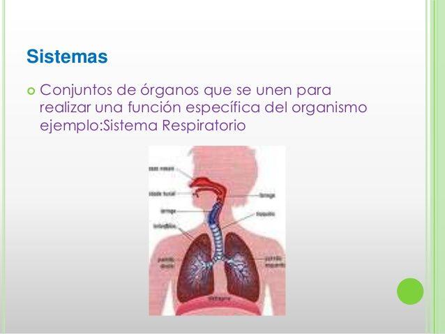 Sistemas Conjuntos de órganos que se unen pararealizar una función ...