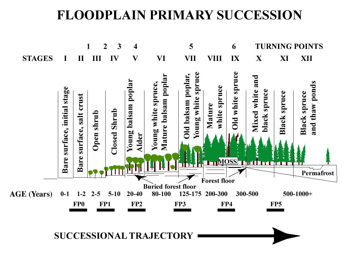 Forest Succession Over Time Six Stages