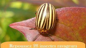 Voici comment repousser 28 parasites de votre jardin avec des herbes et des h - Comment repousser les pies ...
