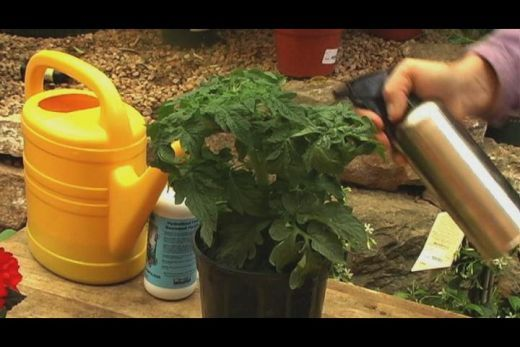 The Benefits Of Liquid Seaweed Fertilizer Growing 400 x 300