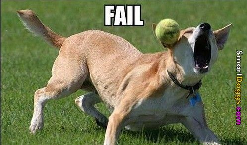 Smartdoggs Com Dog Can T Catch Tennis Ball Fail With Images