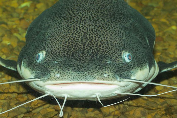 Catfish slang definition