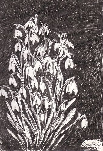 Cornish Snowdrops Photography Prints Art Green Witchcraft Drawings