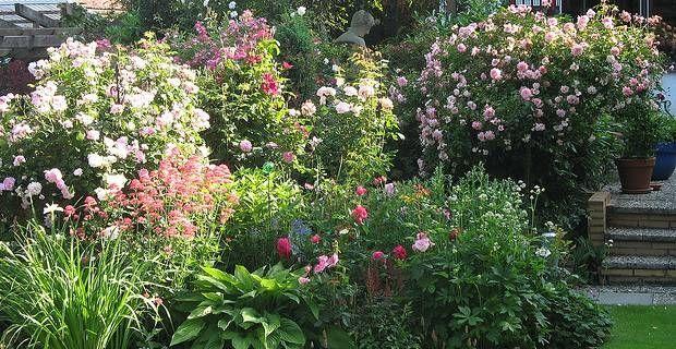 mediterrane pflanzen im garten und auf der terrasse | mediterraner, Gartenarbeit ideen