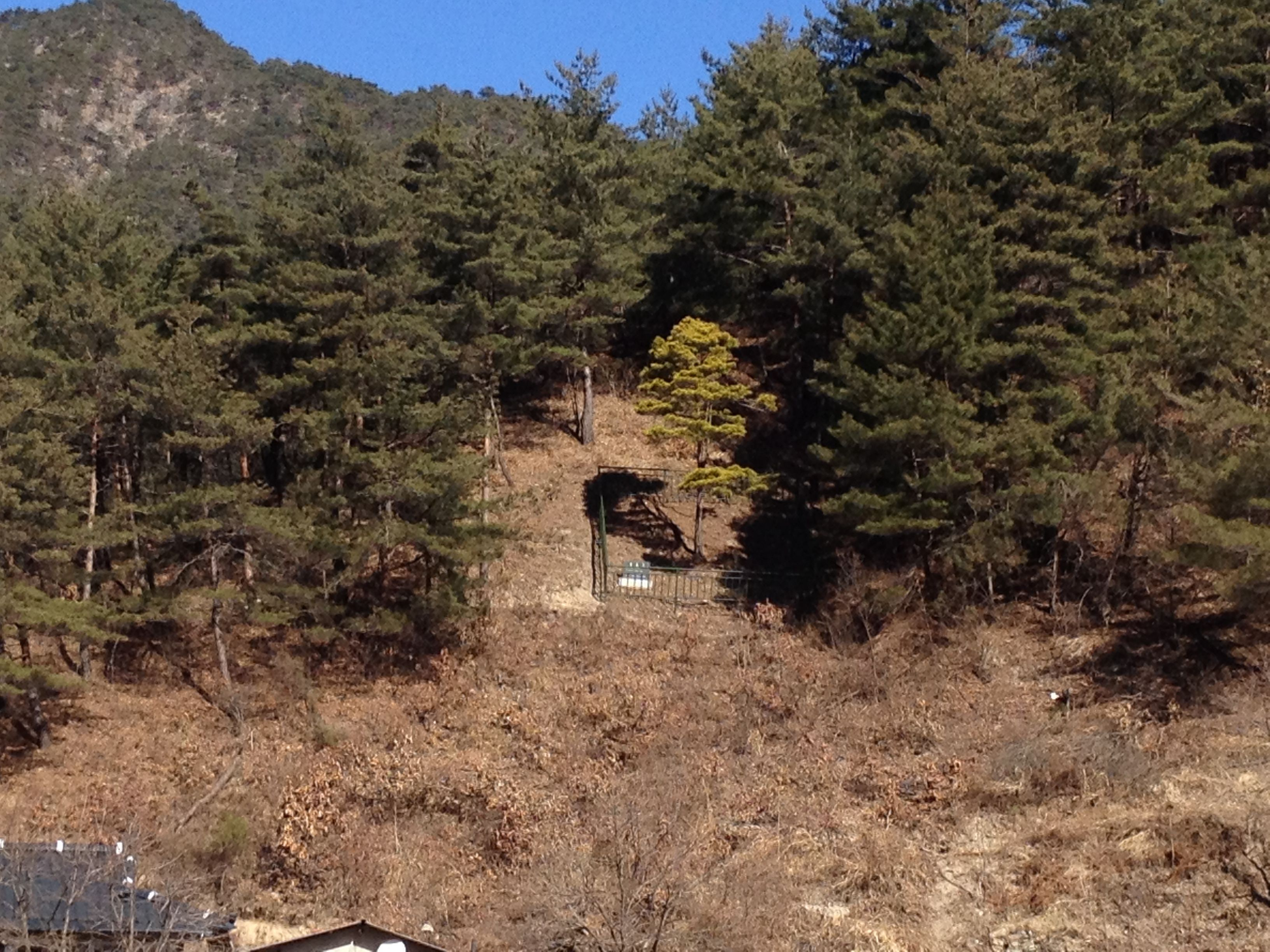 golden pine tree at ul jin my travel list pinterest travel list