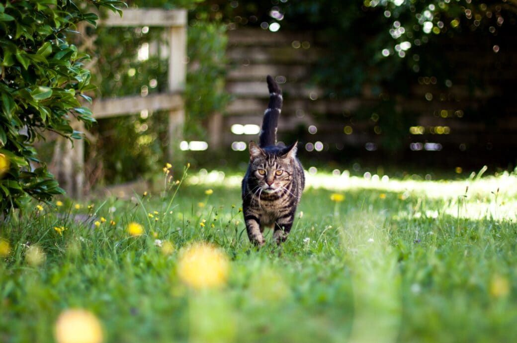 4 Methoden Um Katzen Im Garten Schonend Zu Vertreiben Cat Repellant Cool Cats Pets Cats