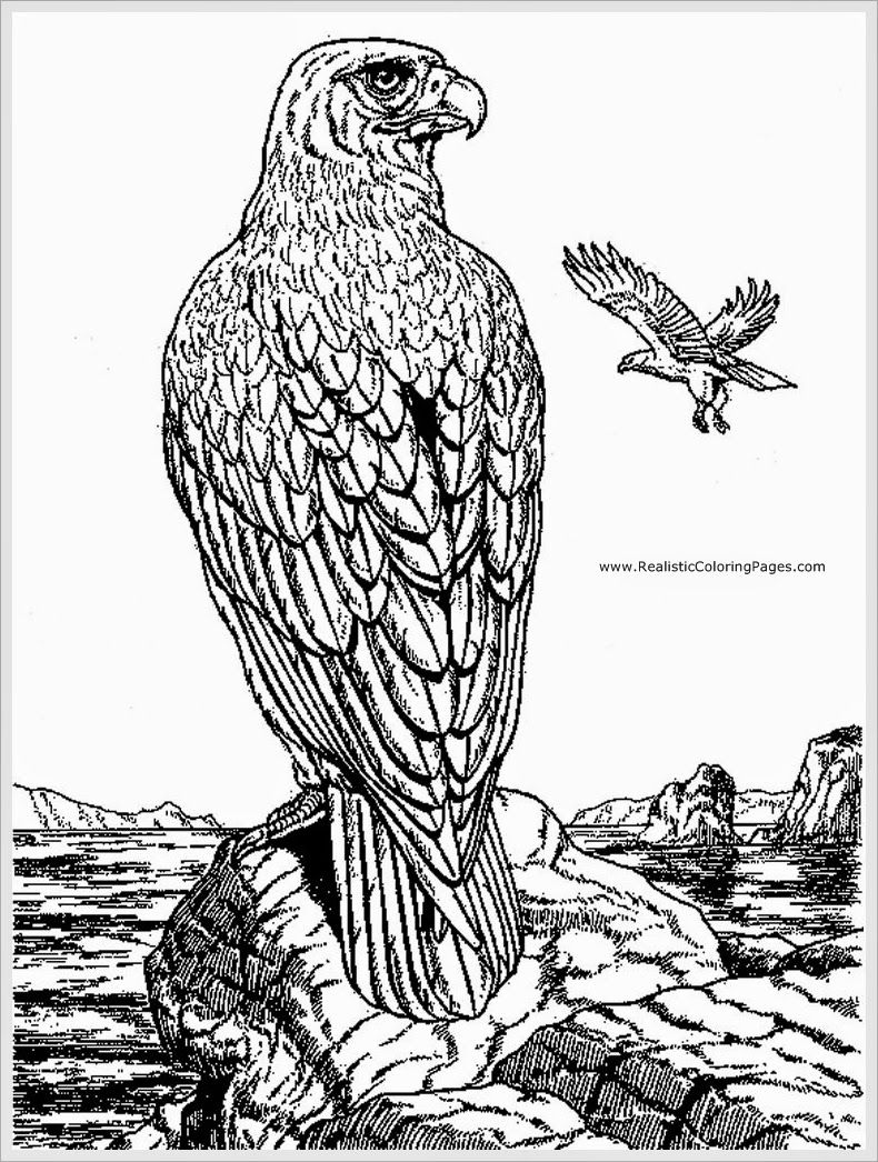 eagle adult coloring pages | coloring pages for adults | Pinterest ...