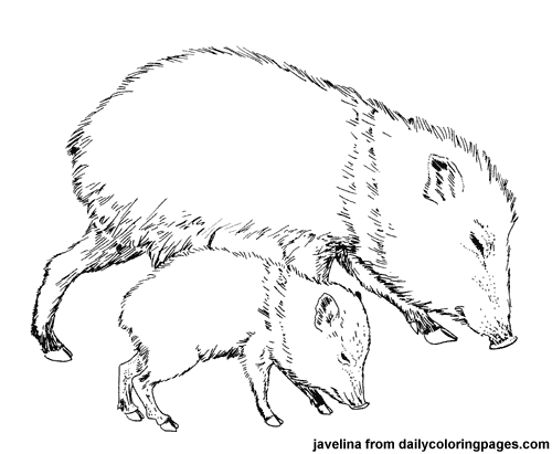 Animal coloring pages create an mentioning coloring activity for