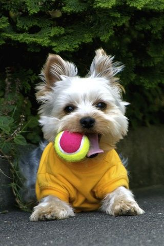 Don T Buy One Of Those Expensive Dog Toys That Look Like A Build A