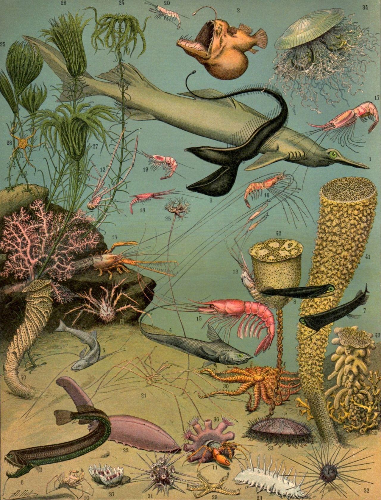 Adolphe Millot Oceans Nouveau Larousse Illustre Paris 1897