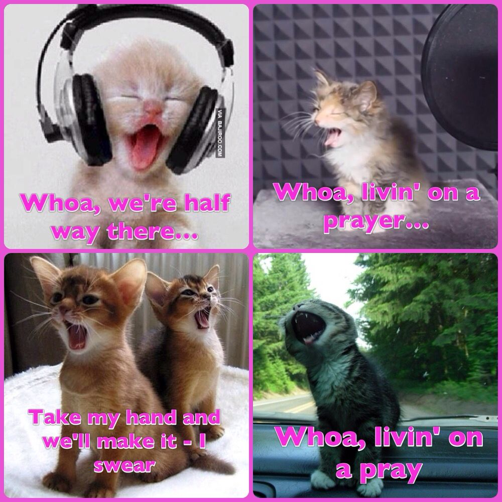 """A little Meowsic. """"Whoa, livin' on a prayer"""" - be truthful you can't read that without singing it in your head"""
