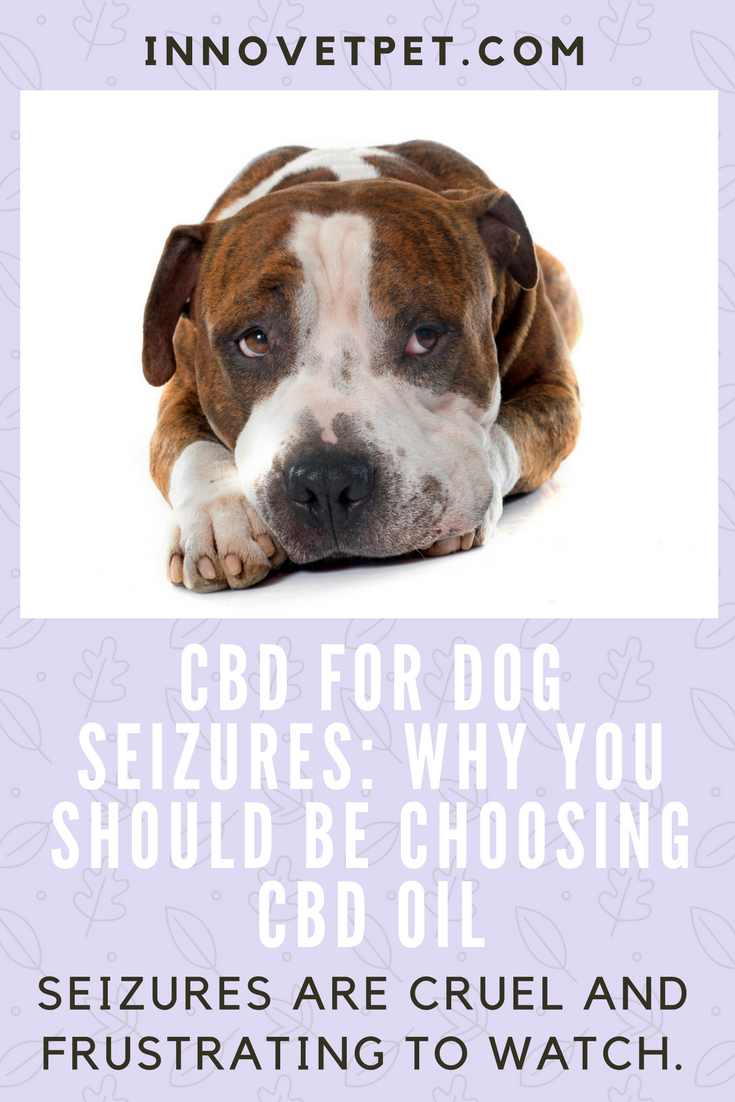 CBD Oil For Treating Seizures & Epilepsy In Dogs