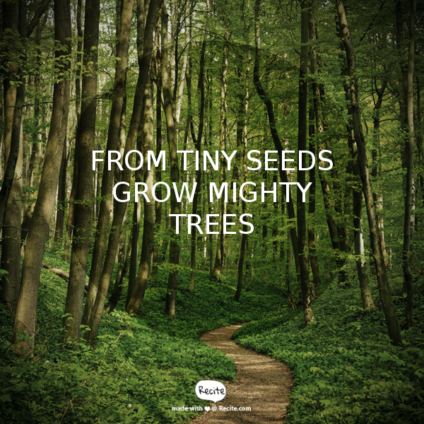 From Tiny Seeds Grow Mighty Trees Quote From Recitecom Recite
