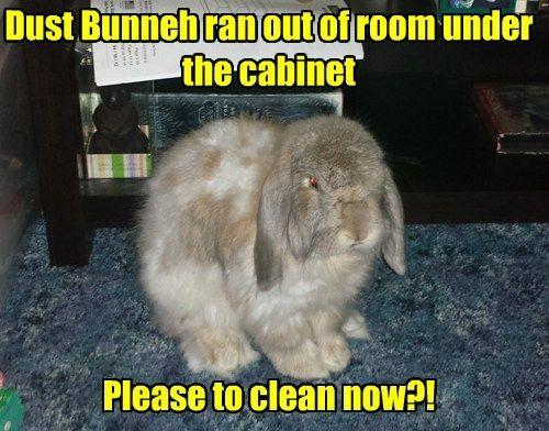 Funny Pictures With Captions Clean With Animals funny pictures ...