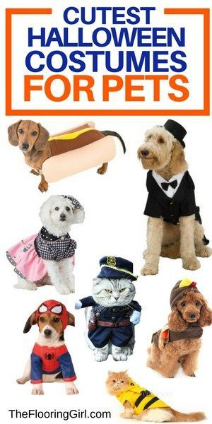 The Cutest Halloween Costumes for Pets Dog and Cat outfits Cat - cute cat halloween costume ideas