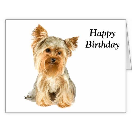 Funny Happy Birthday Yorkie Quoteeveryday Com Yorkshire Terrier Yorkshire Terrier Training Yorkshire Terrier Dog