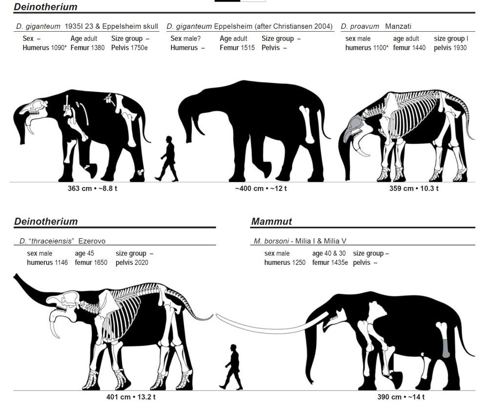 Mammoth Size Diagram Wiring And Engine Parative Sizes Of The Mainland Mammuthus Columbi Pygmy Fig2 289496196 Moreover