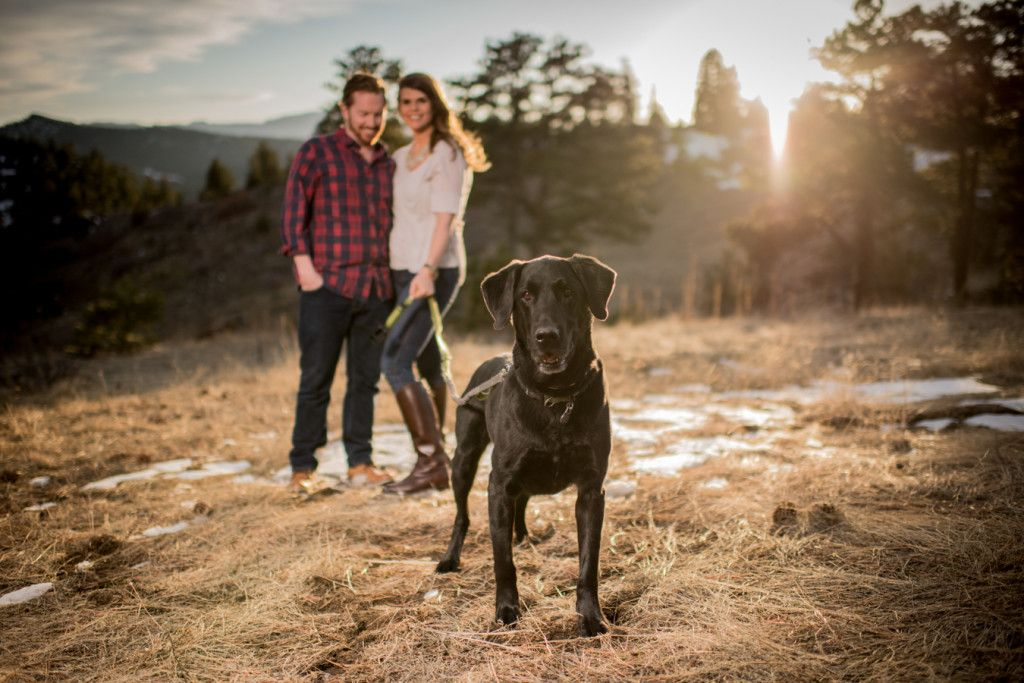 Dog Photo at Sunset in Colorado Mountains
