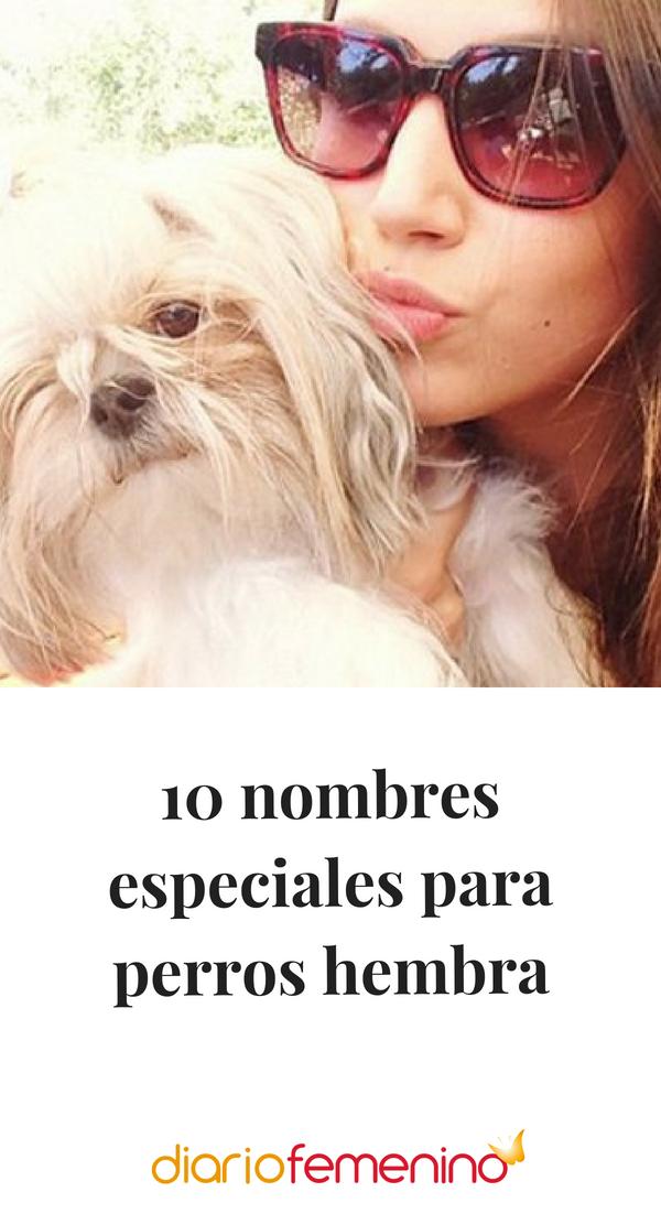 10 Nombres Especiales Para Perros Hembra Nombres Para Perro Hembra Nombres De Perro Hembra Nombres Perros Hembras