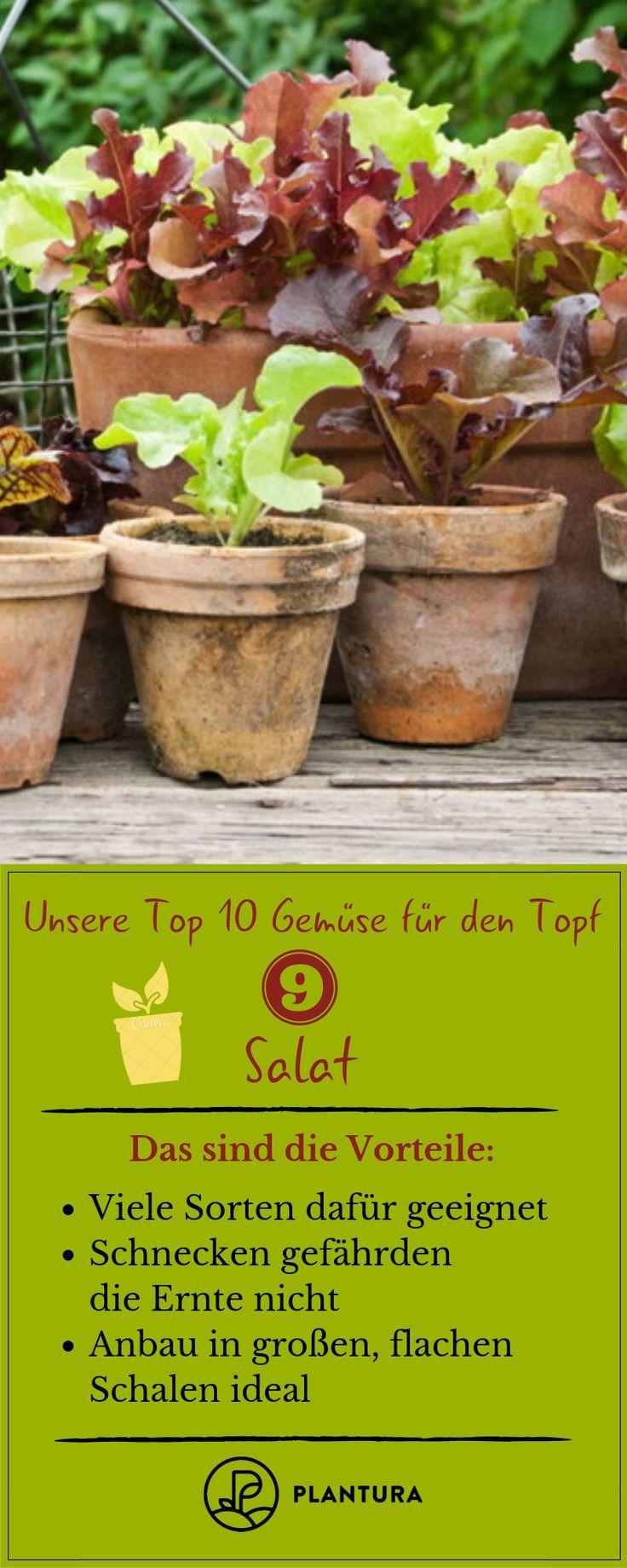 Gemüse im Topf anbauen: Die 10 besten Sorten für die Topfkultur   - Gemüsegarten: Gemüse anbauen im Gemüsebeet -