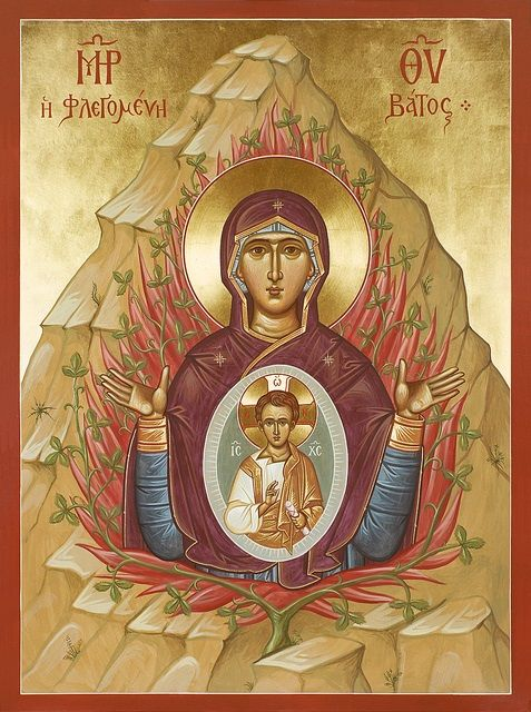 Image result for On the Immaculate Conception: Saint Lawrence of Brindisi