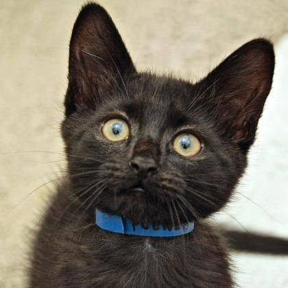 Cats Baby Kittens Adoption Cute Cats