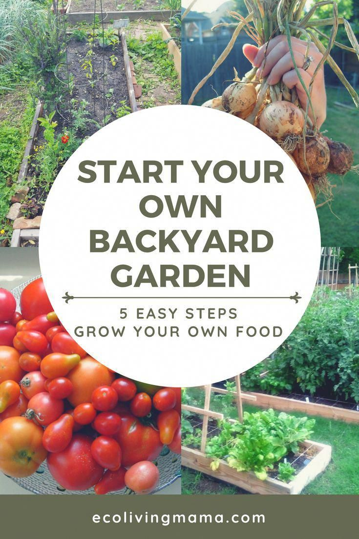 How to start a vegetable garden in 5 easy steps #howtogrowvegetables
