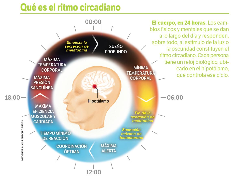 Resultado de imagen de ritmos circadianos
