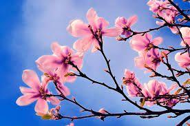 Image result for pink blue  tree wallpaper