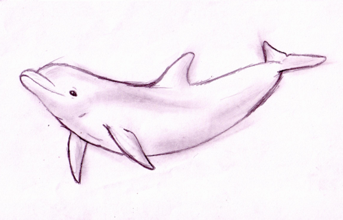 33++ Dolphin sketch ideas