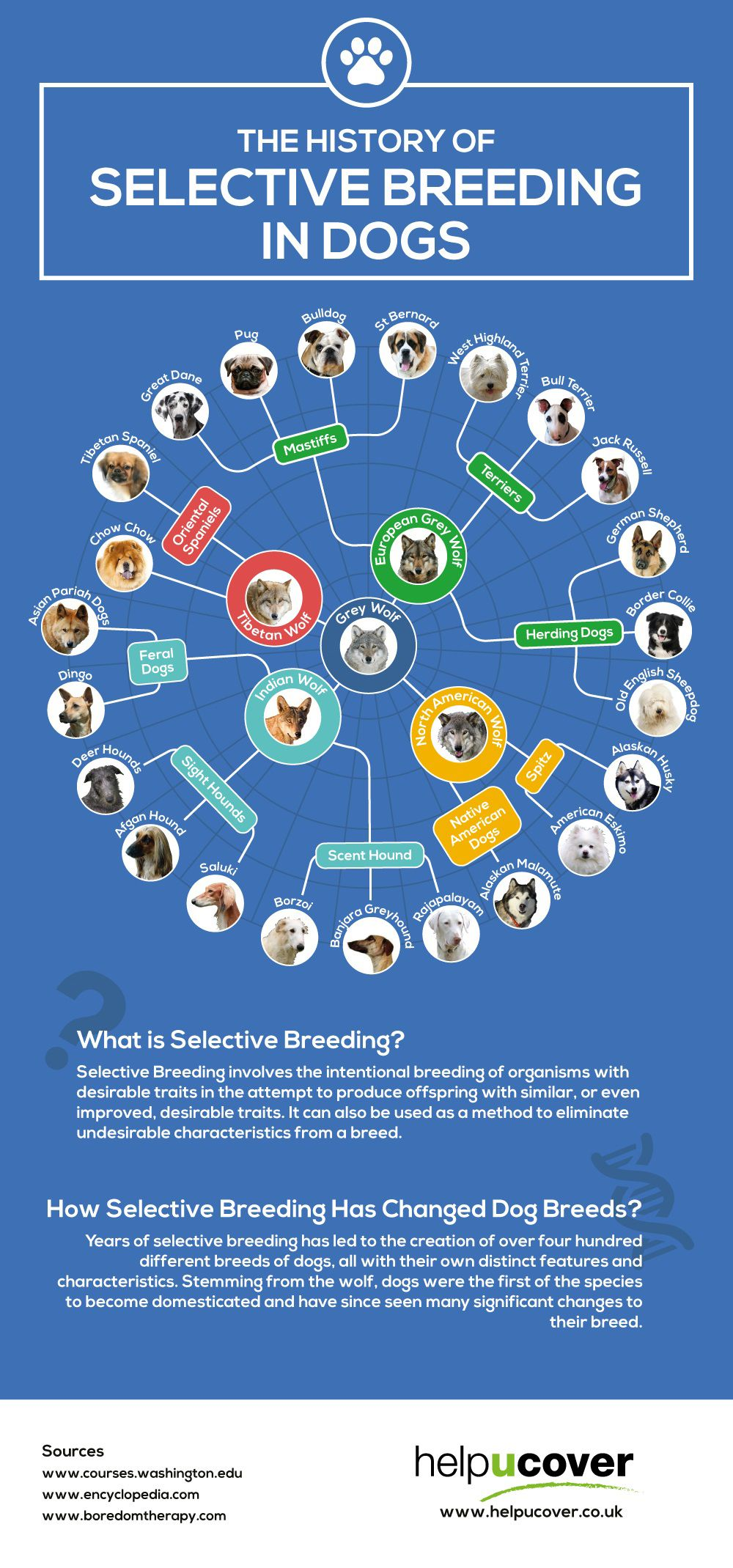 The History of Selective Breeding in Dogs #Infographic