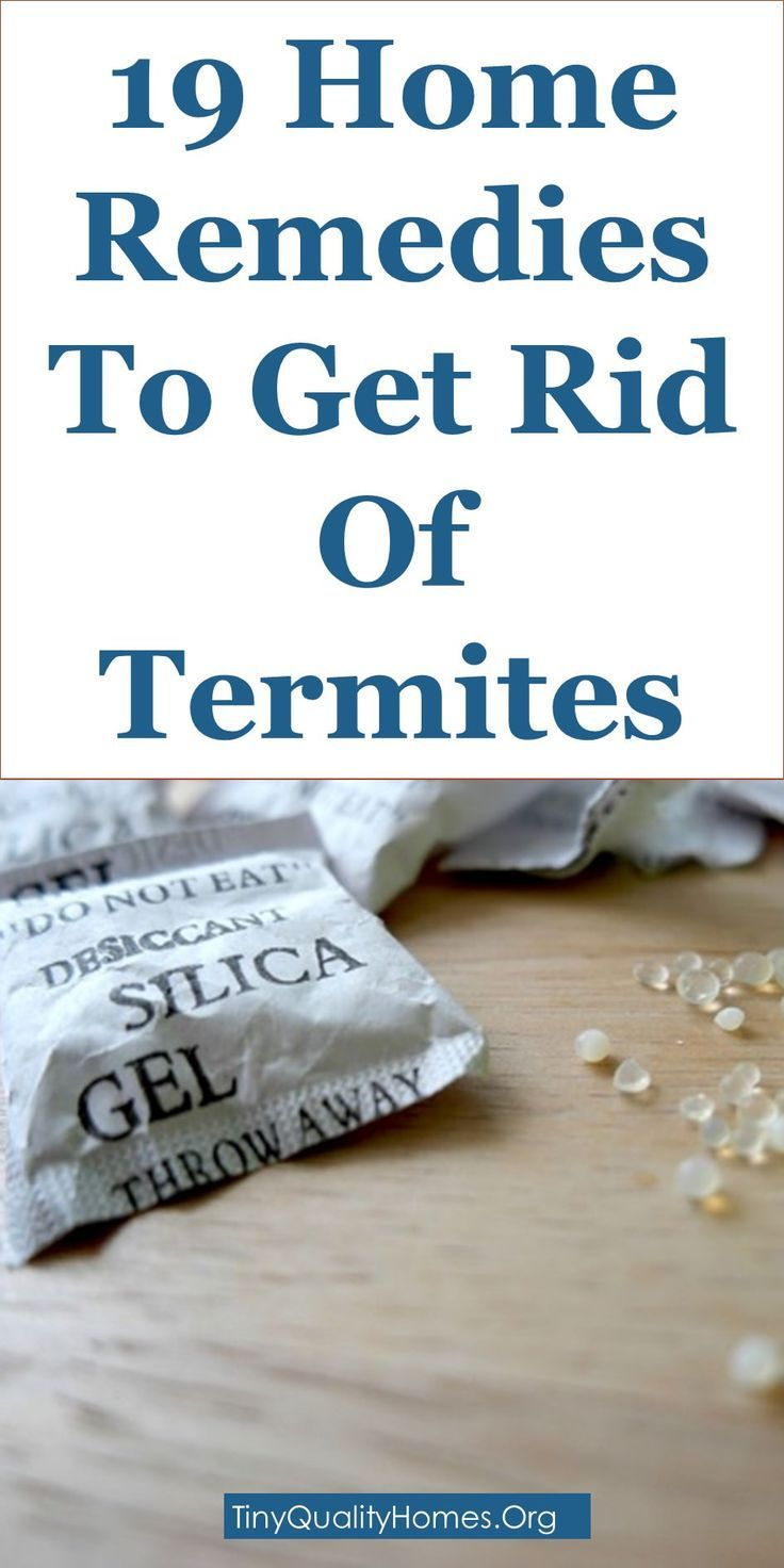 19 Home Remedies To Get Rid Of Termites | Borax solution, Boric acid ...