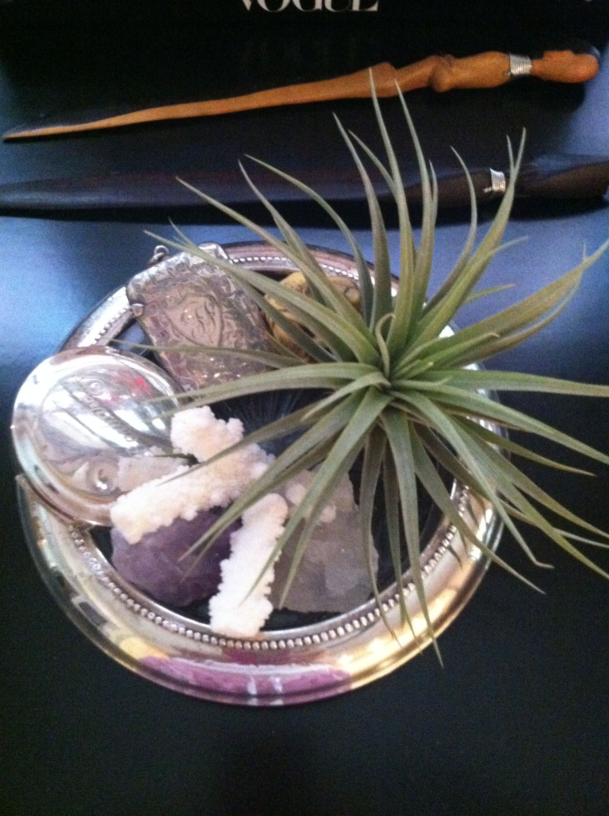 Fall 2012 is all about the airplant